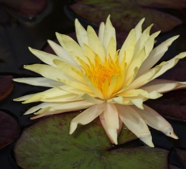Sribangpra im Korb